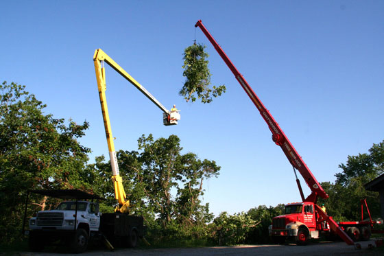 Chattanooga Tree Service Inc Equipment