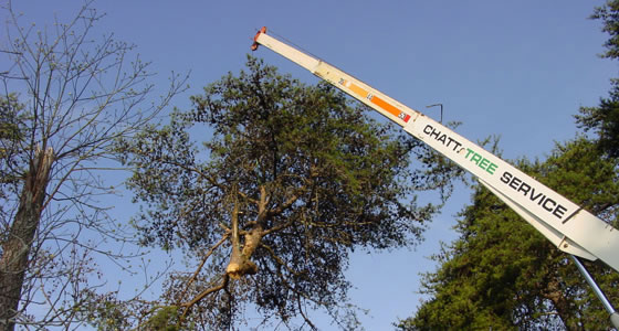 Crane removing top of tree